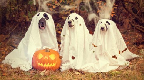 Even more fun than dressing yourself for Halloween--dress your pet! Source: Dogs Today Magazine